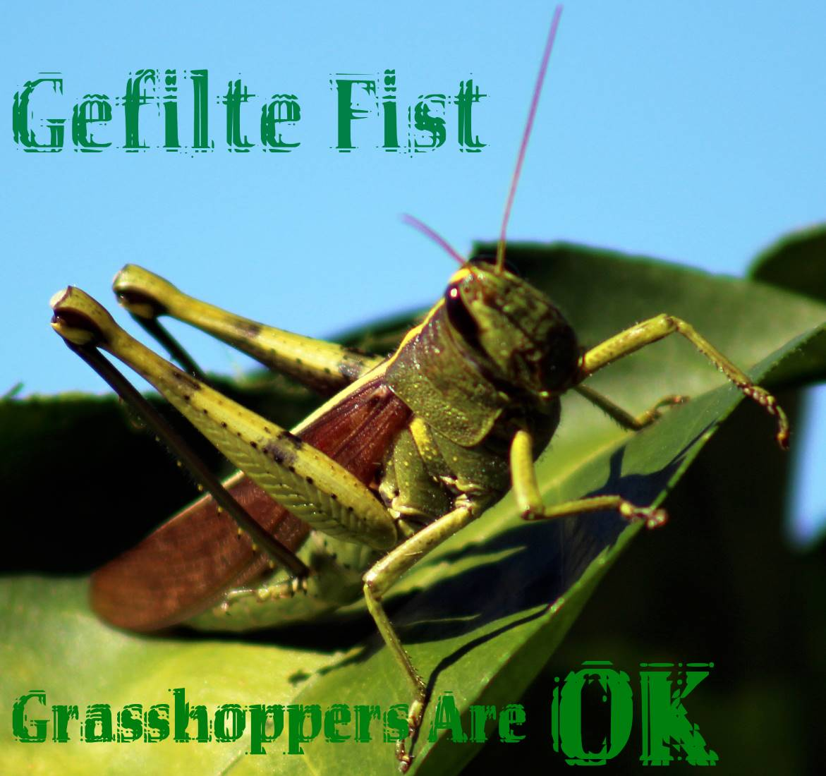 Grasshoppers Are OK